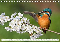 Faszination Eisvogel (Tischkalender 2019 DIN A5 quer) - Produktdetailbild 5