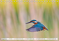Faszination Eisvogel (Tischkalender 2019 DIN A5 quer) - Produktdetailbild 8