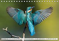 Faszination Eisvogel (Tischkalender 2019 DIN A5 quer) - Produktdetailbild 11