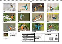 Faszination Eisvogel (Wandkalender 2019 DIN A3 quer) - Produktdetailbild 2