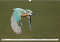 Faszination Eisvogel (Wandkalender 2019 DIN A3 quer) - Produktdetailbild 4