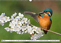 Faszination Eisvogel (Wandkalender 2019 DIN A3 quer) - Produktdetailbild 3