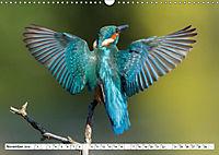 Faszination Eisvogel (Wandkalender 2019 DIN A3 quer) - Produktdetailbild 6