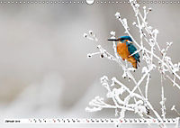 Faszination Eisvogel (Wandkalender 2019 DIN A3 quer) - Produktdetailbild 8
