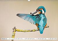 Faszination Eisvogel (Wandkalender 2019 DIN A3 quer) - Produktdetailbild 10