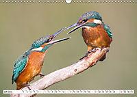 Faszination Eisvogel (Wandkalender 2019 DIN A3 quer) - Produktdetailbild 7