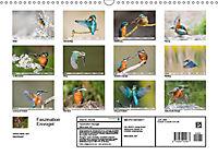 Faszination Eisvogel (Wandkalender 2019 DIN A3 quer) - Produktdetailbild 13