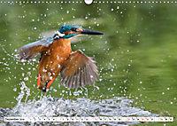Faszination Eisvogel (Wandkalender 2019 DIN A3 quer) - Produktdetailbild 12