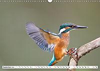 Faszination Eisvogel (Wandkalender 2019 DIN A3 quer) - Produktdetailbild 9