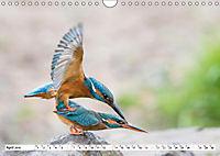 Faszination Eisvogel (Wandkalender 2019 DIN A4 quer) - Produktdetailbild 8
