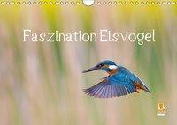 Faszination Eisvogel (Wandkalender 2019 DIN A4 quer), Wilfried Martin