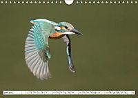 Faszination Eisvogel (Wandkalender 2019 DIN A4 quer) - Produktdetailbild 3