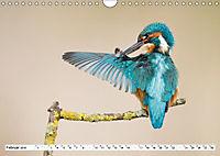 Faszination Eisvogel (Wandkalender 2019 DIN A4 quer) - Produktdetailbild 2