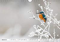 Faszination Eisvogel (Wandkalender 2019 DIN A4 quer) - Produktdetailbild 5