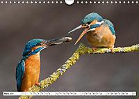 Faszination Eisvogel (Wandkalender 2019 DIN A4 quer) - Produktdetailbild 4