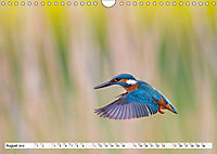 Faszination Eisvogel (Wandkalender 2019 DIN A4 quer) - Produktdetailbild 9