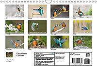 Faszination Eisvogel (Wandkalender 2019 DIN A4 quer) - Produktdetailbild 11