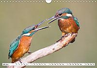 Faszination Eisvogel (Wandkalender 2019 DIN A4 quer) - Produktdetailbild 12