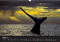 Faszination Glattwale (Wandkalender 2019 DIN A3 quer) - Produktdetailbild 3