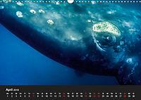 Faszination Glattwale (Wandkalender 2019 DIN A3 quer) - Produktdetailbild 4