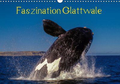 Faszination Glattwale (Wandkalender 2019 DIN A3 quer), Armin Maywald
