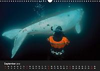 Faszination Glattwale (Wandkalender 2019 DIN A3 quer) - Produktdetailbild 9