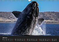 Faszination Glattwale (Wandkalender 2019 DIN A3 quer) - Produktdetailbild 7