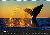 Faszination Glattwale (Wandkalender 2019 DIN A3 quer) - Produktdetailbild 10