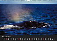 Faszination Glattwale (Wandkalender 2019 DIN A3 quer) - Produktdetailbild 11