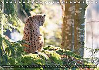 Faszination Luchs (Tischkalender 2019 DIN A5 quer) - Produktdetailbild 5