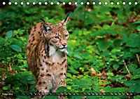 Faszination Luchs (Tischkalender 2019 DIN A5 quer) - Produktdetailbild 10