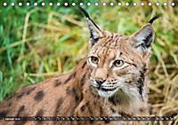 Faszination Luchs (Tischkalender 2019 DIN A5 quer) - Produktdetailbild 9