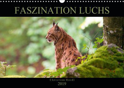 Faszination Luchs (Wandkalender 2019 DIN A3 quer), www.chphotography.de