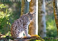 Faszination Luchs (Wandkalender 2019 DIN A4 quer) - Produktdetailbild 2