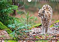 Faszination Luchs (Wandkalender 2019 DIN A4 quer) - Produktdetailbild 3