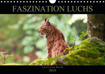 Faszination Luchs (Wandkalender 2019 DIN A4 quer), www.chphotography.de