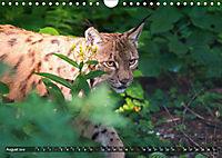 Faszination Luchs (Wandkalender 2019 DIN A4 quer) - Produktdetailbild 8