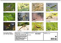 Faszination Makro - Die Welt der Libellen (Wandkalender 2019 DIN A2 quer) - Produktdetailbild 1