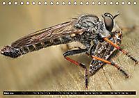 Faszination Makrofotografie: Beuteszenen (Tischkalender 2019 DIN A5 quer) - Produktdetailbild 3