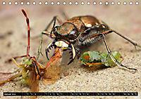 Faszination Makrofotografie: Beuteszenen (Tischkalender 2019 DIN A5 quer) - Produktdetailbild 1