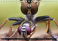 Faszination Makrofotografie: Beuteszenen (Tischkalender 2019 DIN A5 quer) - Produktdetailbild 5