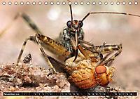 Faszination Makrofotografie: Beuteszenen (Tischkalender 2019 DIN A5 quer) - Produktdetailbild 11