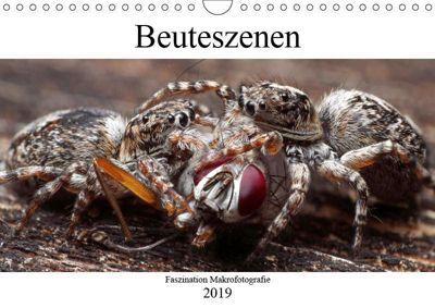 Faszination Makrofotografie: Beuteszenen (Wandkalender 2019 DIN A4 quer), Alexander Mett Photography