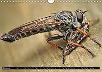 Faszination Makrofotografie: Beuteszenen (Wandkalender 2019 DIN A4 quer) - Produktdetailbild 3