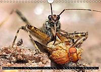 Faszination Makrofotografie: Beuteszenen (Wandkalender 2019 DIN A4 quer) - Produktdetailbild 11