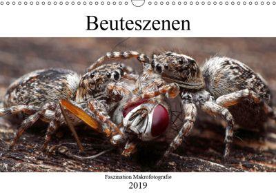 Faszination Makrofotografie: Beuteszenen (Wandkalender 2019 DIN A3 quer), Alexander Mett