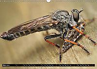 Faszination Makrofotografie: Beuteszenen (Wandkalender 2019 DIN A3 quer) - Produktdetailbild 3