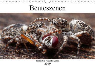 Faszination Makrofotografie: Beuteszenen (Wandkalender 2019 DIN A4 quer), Alexander Mett