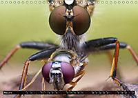 Faszination Makrofotografie: Beuteszenen (Wandkalender 2019 DIN A4 quer) - Produktdetailbild 5