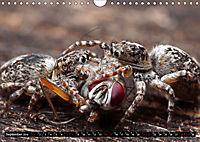 Faszination Makrofotografie: Beuteszenen (Wandkalender 2019 DIN A4 quer) - Produktdetailbild 9